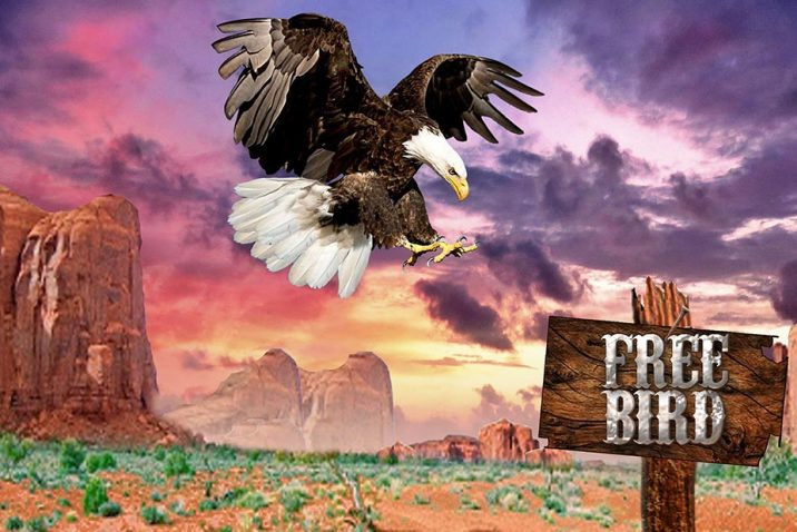 New 'Free Bird' Charity Single Mixed and Mastered by GRAMMY® Winner Emily Lazar